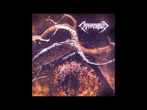 Capharnaum - Ingrained