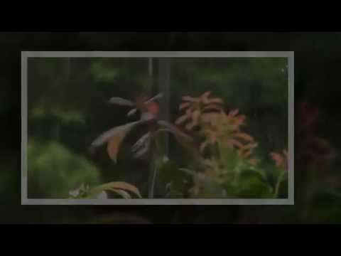 Denis Turbide - Warm And Tender - Music To Relax - Without Rain video