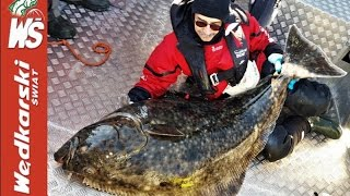 Nordkapp, halibut 157 cm Jacka Kolendowicza, C&R – film podwodny (underwater movie)