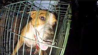 RESCUE: 3 Ekor Anjing Ini Diselamatkan dari Ancaman Pemakan Daging Anjing