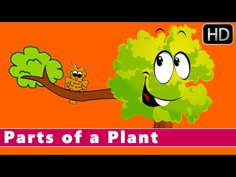 Parts of a Plant | Learn about Plants | Animation Nursery Rhymes