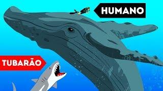 9 Animais Selvagens Que Salvaram Seres Humanos