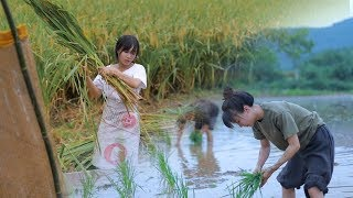 月儿圆圆,稻米飘香,正逢农家收谷忙Full Moon, Fragrance of Ripe Rice, Farmers Busy Harvesting Crops | Liziqi Channel