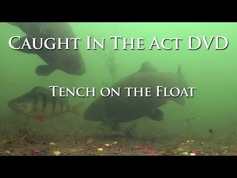 Tench on the Float - Caught In The Act DVD