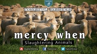 MERCY When Slaughtering Animals – Powerful Reminder