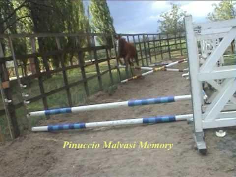 Cavallo pezzato da salto