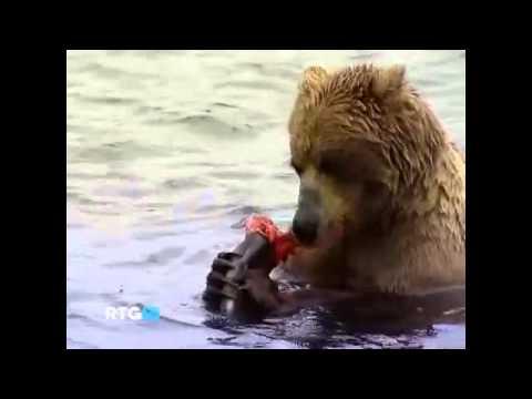 Фильм о русских медведях
