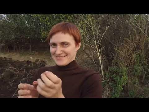 первый раз пашем огород)сажаем чеснок!