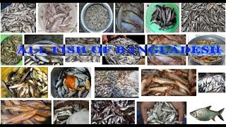 fish of bangladesh