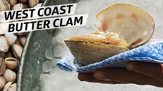 Diving for World Class Butter Clams Off the Coast of Oregon — Deep Dive