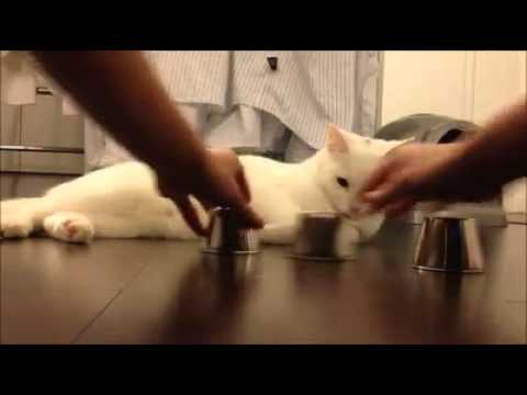 Random but clever cat