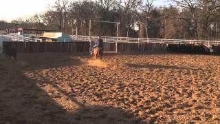 Pongo- Jared Lesh Cowhorses