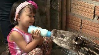 Ayumi aventureira: conheça a garotinha que vive rodeada de animais selvagens
