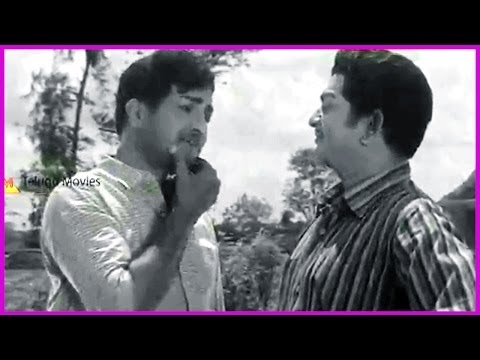Ntr & Rajanala Fight - In Ramu Telugu Movie Scene - Jamuna video