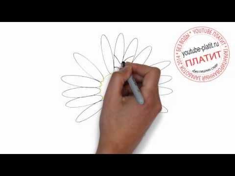 Видео как нарисовать ромашку карандашом поэтапно
