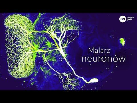 Santiago Ramón Y Cajal – Malarz Neuronów, Maciej Dulewicz
