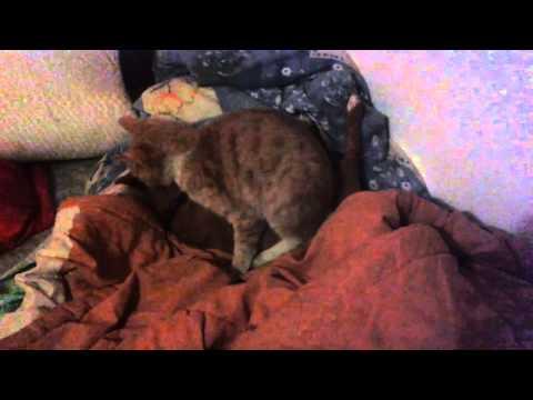Cat Fucking Dog video