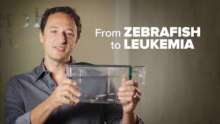 From Zebrafish to Leukemia Cure