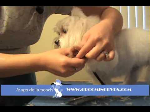 0 How To Round The Feet On A Dog Trim A Dogs Foot How To Groom A Maltese
