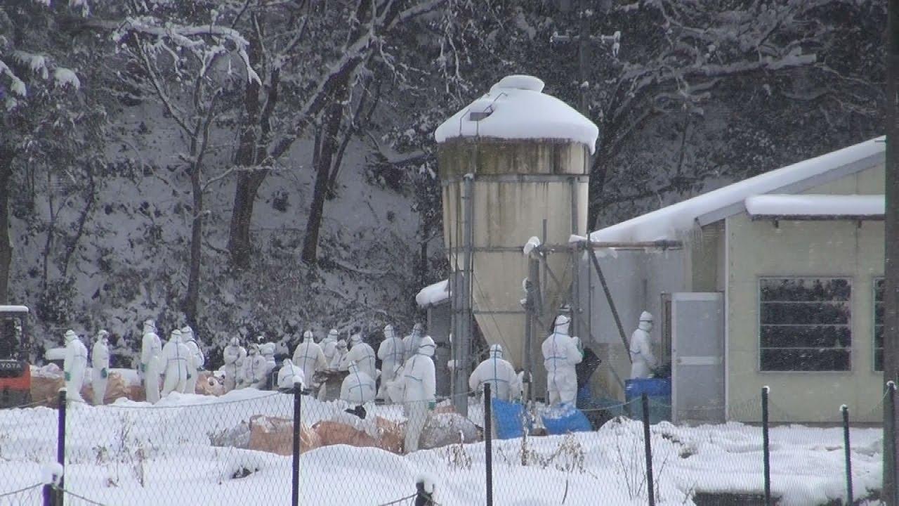 岐阜の養鶏場で鳥インフル