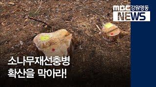 투R)소나무재선충병 영동지역으로 확산을 막아라!