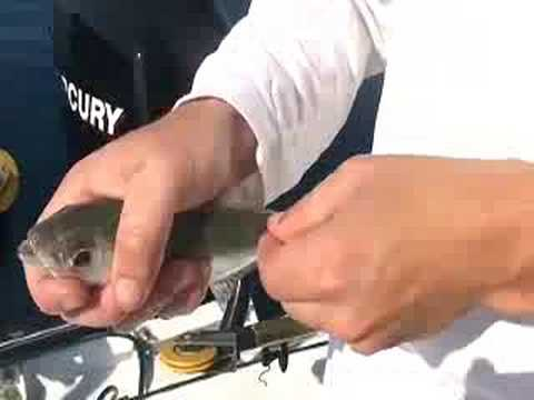 How to rig live bait with Steve Waters