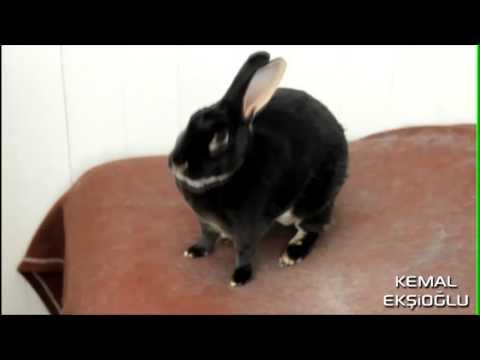 Çığlık Atan Tavşan