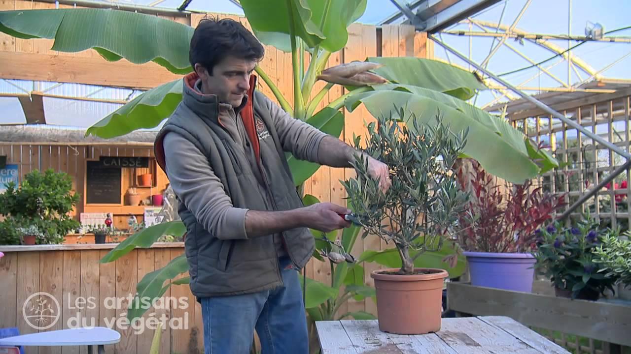Comment tailler en nuage un olivier en pot youtube - Quand couper un olivier ...