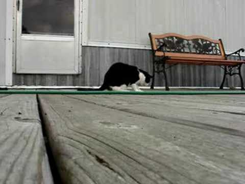 funny cats video. Funny Cat Video 2: Crazy Cats