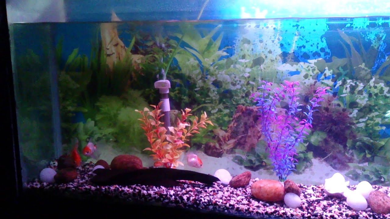 My fish tank youtube for Fish tank youtube