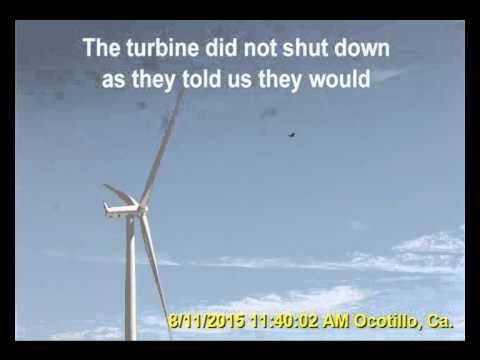 Ocotillo Wind - Pattern Energy Turkey Vulture escapes death