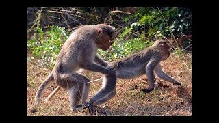 Funny Monkey Hot Video* Whatsapp Funny Video* Whatsapp Funny Monkey Sexi Video