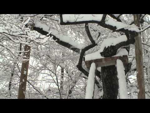 本巣市根尾 ~淡墨桜(うすずみざくら)の雪景色~