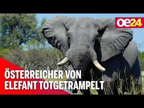 Österreicher von Elefant totgetrampelt