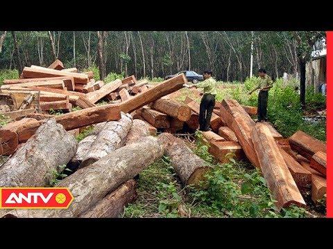 Đắk Nông: Nhức nhối công ty bảo vệ mở cửa cho lâm tặc phá rừng | Điều tra | ANTV thumbnail