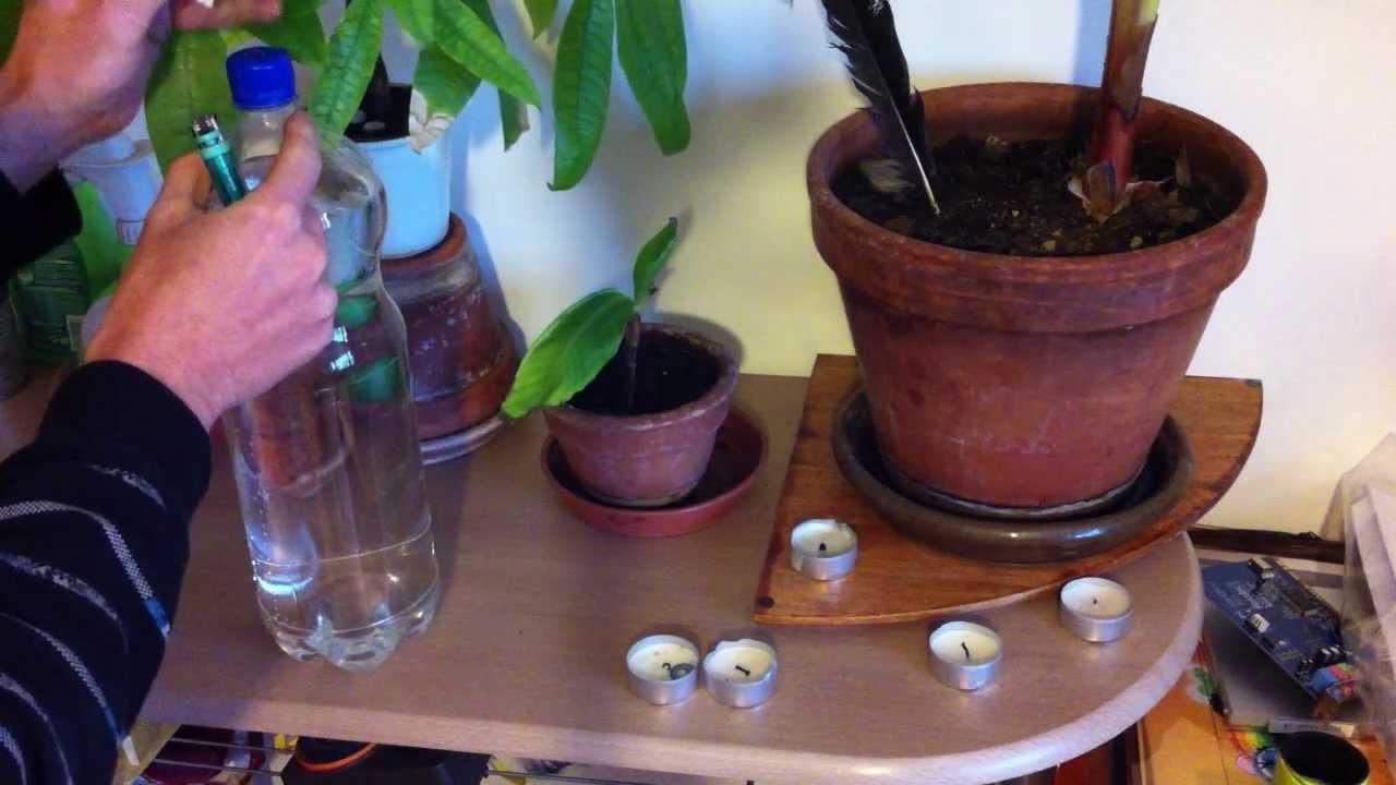 vacances astuces pour arroser ses plantes pendant de longues absences conseils jardinage. Black Bedroom Furniture Sets. Home Design Ideas