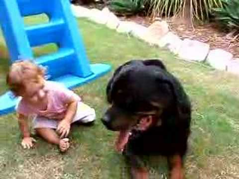 1yr old baby attacks rottweiler
