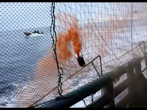 February 11, 2012  Zodiacs Attack Yushin Maru # 2 With Smoke Bombs, Ropes and Butyric acid