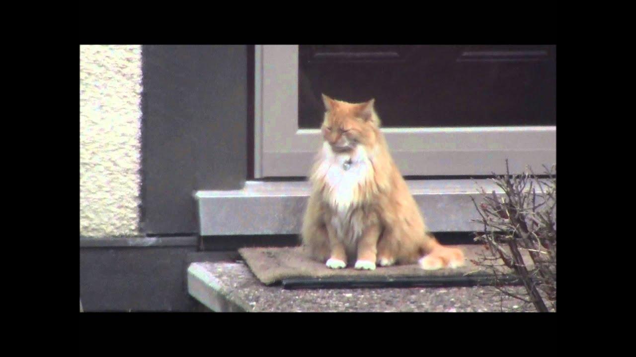 Cat Guards me Guard Cat