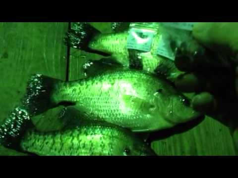 Crappie Fishing Nite Time Uncle Rick's Duck Cove Marina Lak