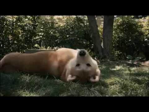 Hachiko - Eine wunderbare Freundschaft - Best Trailer (German)