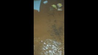 Saturday night flooding at Gray's Automotive Center in Rusk
