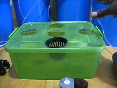 HYDROPONIC BASICS GETTING YOUR DEEP WATER CULTURE SYSTEM STARTED HEAVENLY HARVEST HYDROPONICS