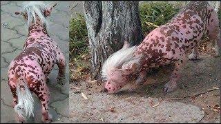 Sinh vật lạ gây xôn xao tại Trung Quốc