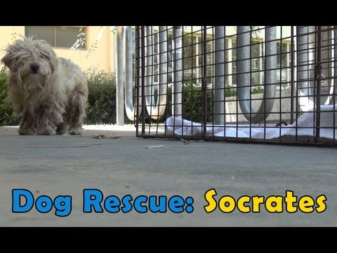 Dog Rescue: Socrates.  Hope For Paws &amp; Bill Foundation.  Music by Derek Luttrell (Please share)