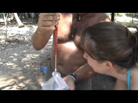 koh phra thong the series HD Part 1 by MediadreamsNetwork 1080P 2012 2013 Naucrates the serie