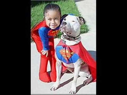 save a pit bull Video