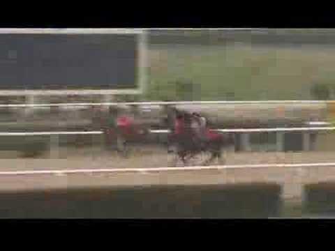 atların idman görüntüsü