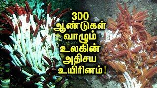 Longest Living Species On Earth!