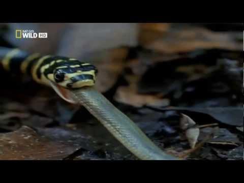 Los Depredadores Mas Letales del Mundo - Asesinos Diminutos - HD